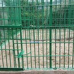 One more cage for the lions. No shadow nothing..no room to move.