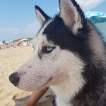 Photo de Dog Beach