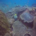 Bilde fra Siren Diving Lembongan
