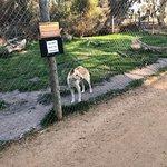 Bild från Halls Gap Zoo