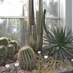 Palmengarten und Botanischer Garten Foto