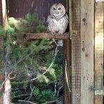 Foto de Alaska Raptor Center