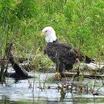 Foto de Marsh Landing Adventures