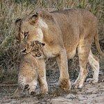 A special moment at Rattrats Mala Mala Reserve