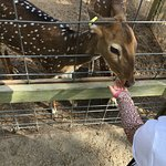 Beautiful deer eating from your hand.
