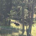 Jackson Hole Eco Tour Adventures resmi