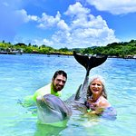 Photo of Dolphin Encounter