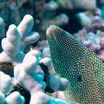 Photo de Waikoloa Coast Divers