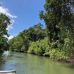 Foto Bruce Belcher's Daintree River Cruises