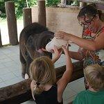 Feeding baby elephant Ele after preparing her bottle.
