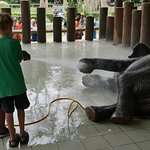 My 9 year old washing one of the elephants.