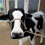 Scoop the cow, our very obvious open sign, when shes out we're open! Yes, even when its snowing!