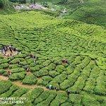 Foto van Cameron Bharat Tea Estate
