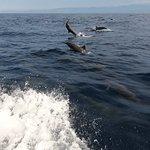 Photo of Omar's Sportfishing