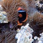 Beautiful marine life at Renggis Island