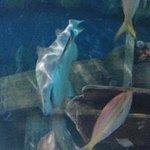 Foto di Ripley's Aquarium