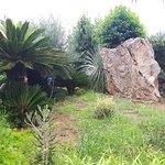 Bilde fra Moli den Pau