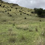 The water only section of the campground is great for birding.  Grasses offer a different habita