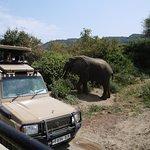 Osiwoo safaris照片