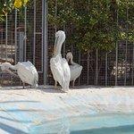 Foto de Hurghada Grand Aquarium