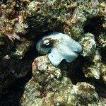 Photo of Aruba Bob Snorkeling