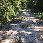 Lots of debris on the trail