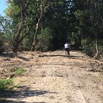Wood chips on the trail