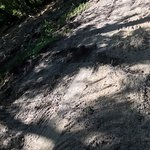 """Crushed limestone surface """"rutted up"""" by the brush cutter"""
