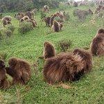 Panoramicsimiens.com/ best adventure in Ethiopia