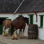 Muckross Traditional Farms照片