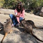 Feeding the animals on the rock