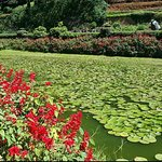 Bilde fra Botanical Gardens