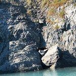 Photo of Major Marine Tours - Kenai Fjords Cruise