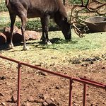 Foto de Grand Canyon Deer Farm