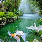 Pond and the beautiful landscapes surrounding it.