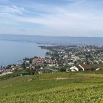 In the Lavaux Terraces