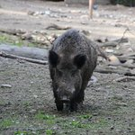 Foto de Heimat-Tierpark Olderdissen