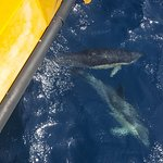 Dolphin Adventureの写真