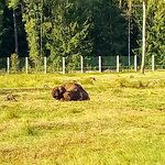 Экскурсионные вольеры лесной зоопарк