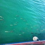 Photo of Tavira Island