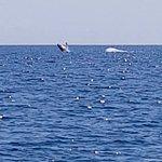 Zdjęcie Pacific Whale Foundation