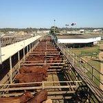 Foto di Roma Cattle Saleyards