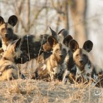 Taken on Safari in the Mayeleti Game Reserve, part of the Greater Kruger National Park