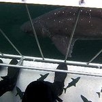 African Shark Eco-Charters Foto
