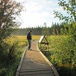 The Beaver Boardwalkの写真