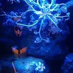 Photo of Aquarium of the Pacific