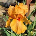 Schreiner's Iris Gardensの写真