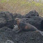 Foto de Galapagos Beach at Tortuga Bay