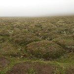 Rocas cubiertas de musgo