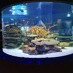 Photo of Two Oceans Aquarium